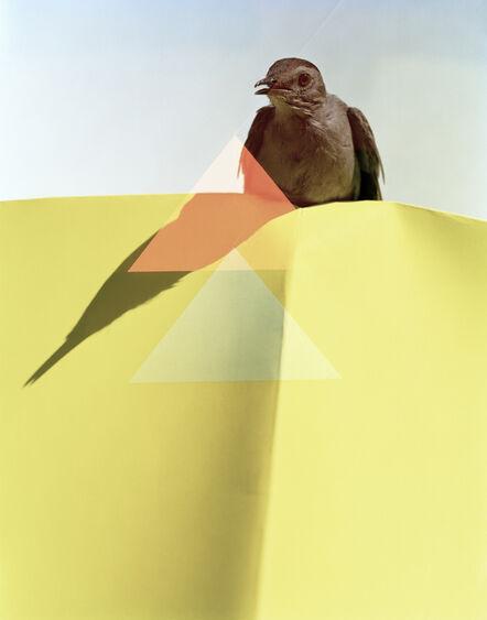 Yola Monakhov Stockton, 'White Sea. Gray Catbird. Manomet, Massachusetts', 2013