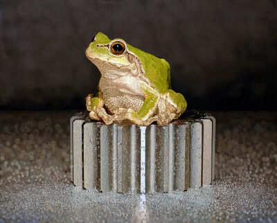 Young-Sung Kim, 'Nothing.Life.Object (Frog on Bolt)', 2014