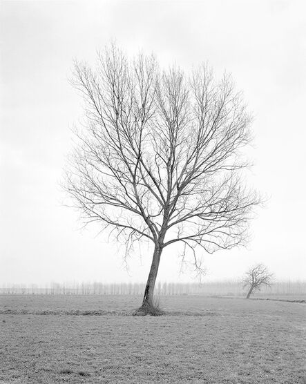 Paola De Pietri, 'Untitled 012, Questa Pianura series', 2004