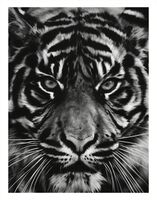 Robert Longo, 'Untitled (Tiger Head 2)', 2014