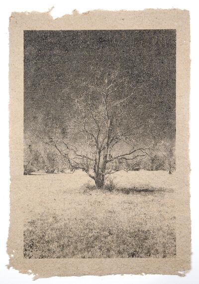 Matthew Brandt, 'Tree 30'