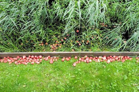Marijke van Warmerdam, 'In and out', 2006