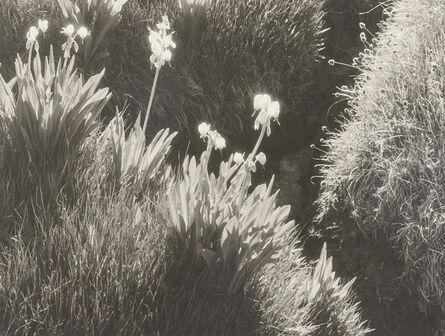 Ansel Adams, 'Sierra Meadow', ca. 1930