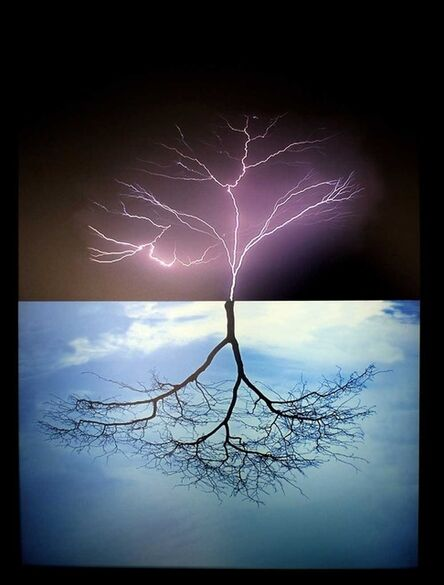 Glenda Leon, 'Mirages: The birth of a tree', 2010