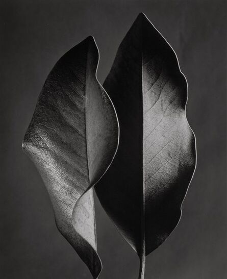 Ruth Bernhard, 'Two Leaves, Hollywood, California', 1952-printed later