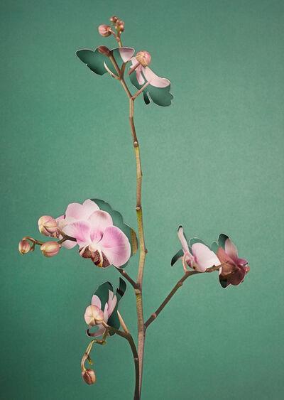 Alma Haser, 'Phalaenopsis', 2018