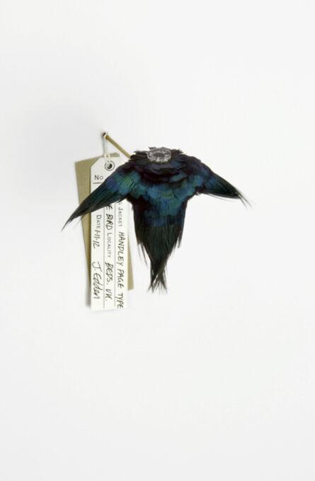 Jane Edden, '80 Handley Page Type A Blue Bird', 2012