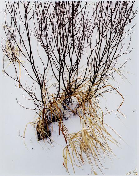 Eliot Porter, 'Grass in Snow, Route 3, North of Saranac Lake, Adirondack Mountains, New York, February 5, 1965', 1965