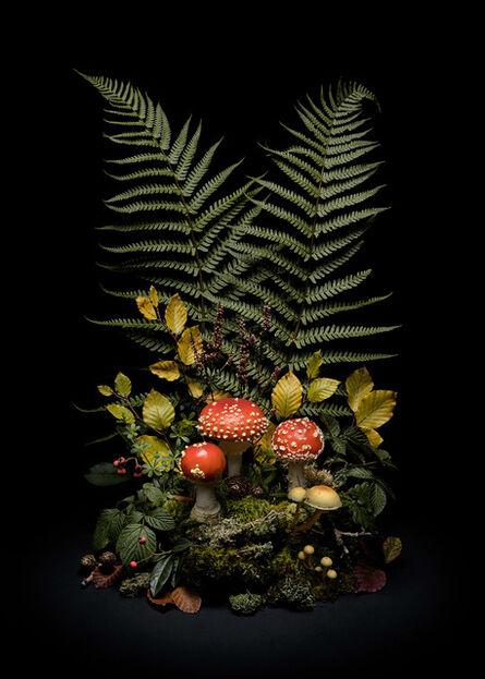 Jasper Goodall, 'Dark Flora #7, Fly Agaric', 2020