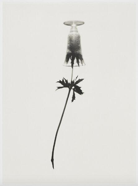 Cornelia Parker, 'Glass and Thistle', 2018