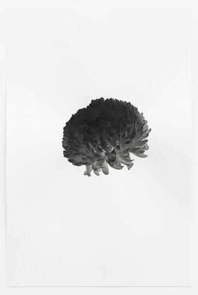 Jelena Bulajic, 'Untitled (after Tillmans)', 2020