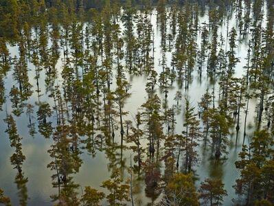 Andrew Moore, 'Beaver Dam Lake I, Tunica, Mississippi', 2014
