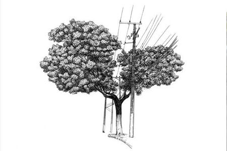 Daniel Caballero, 'Árvore nº 2'