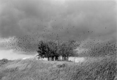 Mark Steinmetz, 'Near Jefferson City, TN', 1991