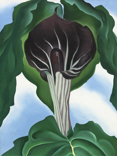 Georgia O'Keeffe, 'Jack-in-the-Pulpit No.3', 1930