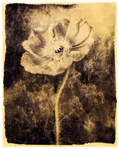 Brigitte Carnochan, 'Some Little Arctic Flower', 2018