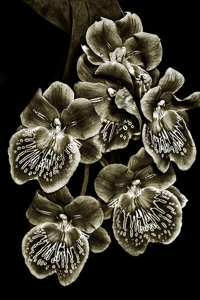 Barry Guthertz, 'Orchid Family #3'