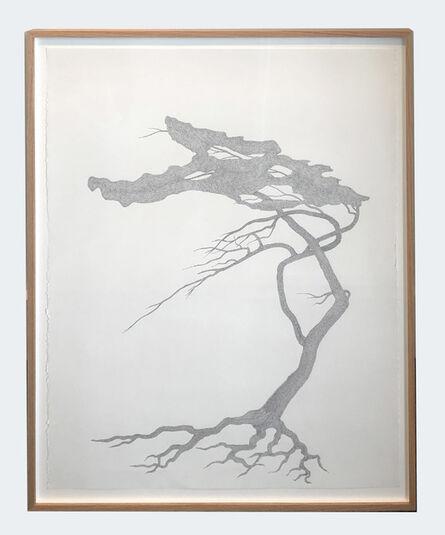 Reinhard Reitzenstein, 'Eastern White Pine', 2016