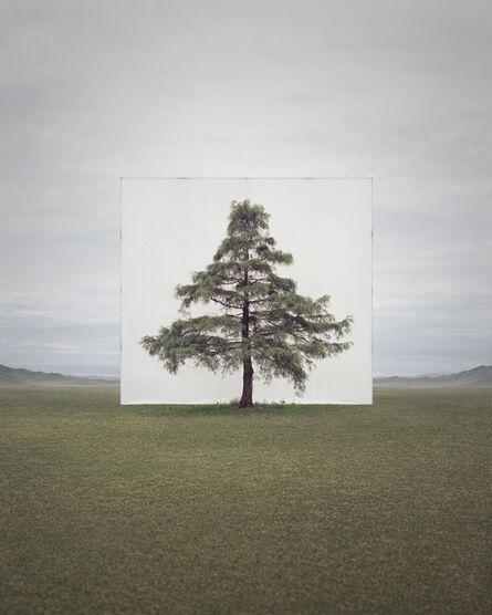 Lee Myoung Ho, 'Tree…#6', 2013