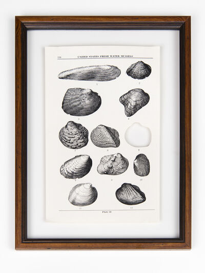 Brandon Ballengée, 'RIP Stirrup Shell Freshwater Mussel: After Walter Freeman Webb, 1942', 2014