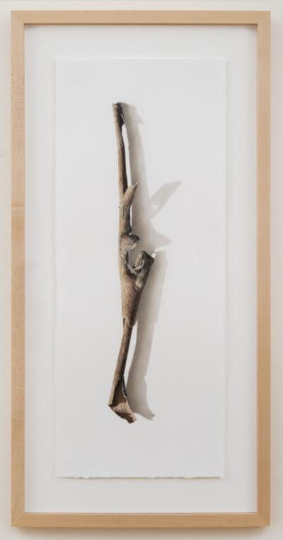 David Morrison, 'Sycamore Series No. 3', 2003