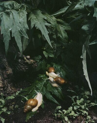 """Sharon Core, 'Untitled #7, from the series """"Understory""""', 2015"""