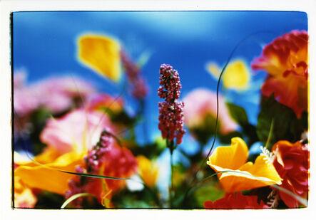 Mika Ninagawa, 'MN-ef-05-01-B4-3 Everlasting Flowers', 2005