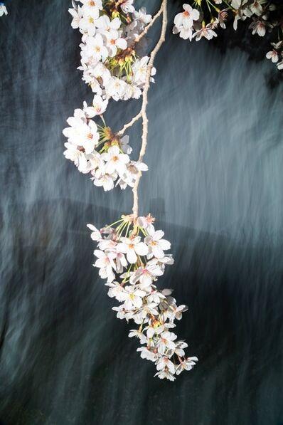 Yoshinori Mizutani, 'Sakura 022', 2015