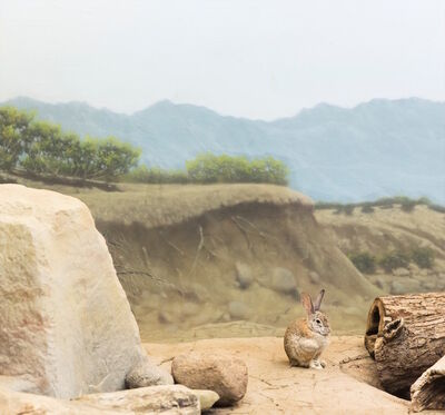 Eric Pillot, 'Rabbit and Desert', 2015