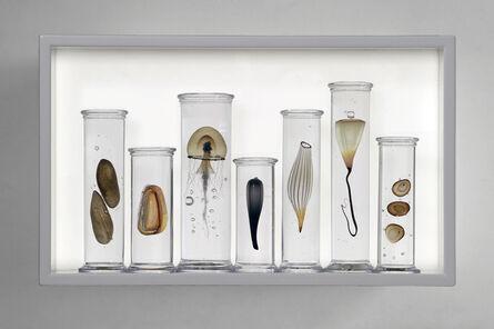 Steffen Dam, 'SEVEN PART SPECIMEN BOX', 2018