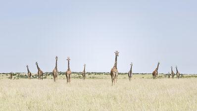 David Burdeny, '12 Giraffes, Maasai Mara, Kenya', 2018