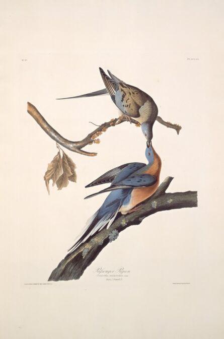 Robert Havell after John James Audubon, 'Passenger Pigeon', 1829