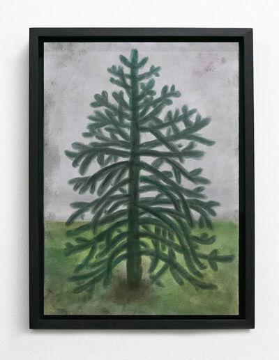 Andrew Sim, ''A small, ornamental Monkey Puzzle tree'', 2020