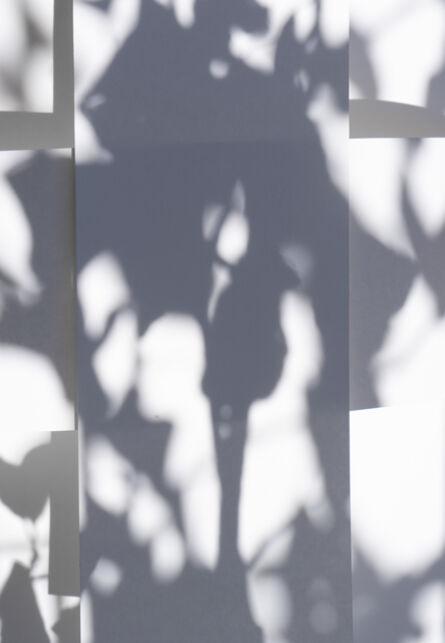 Brenda Biondo, 'Shadow Legacy no. 7', 2020