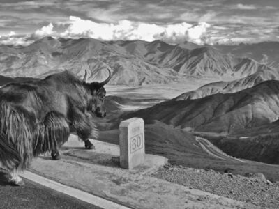"""Riccardo Wolfgang, 'Yak looking at the Tibet vast mountains and the human influence """"photography""""', 2005"""