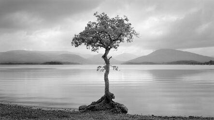 Brian Kosoff, 'Loch and Tree', 2012