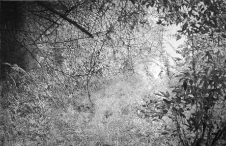 Hugo Bastidas, 'Clearing', 2013
