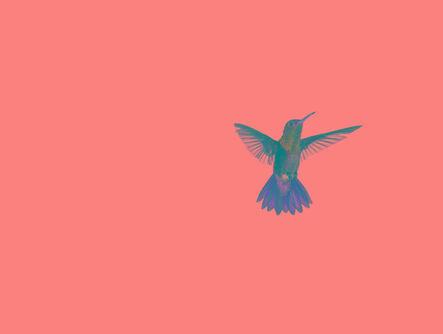 Sanna Kannisto, 'Act of Flying'