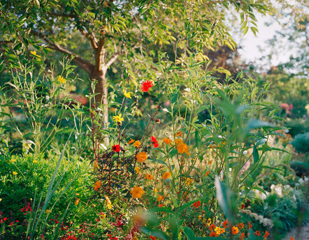 Elger Esser, 'Giverny XI', 2015