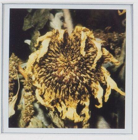 Nobuyoshi Araki, 'Flower', 2004