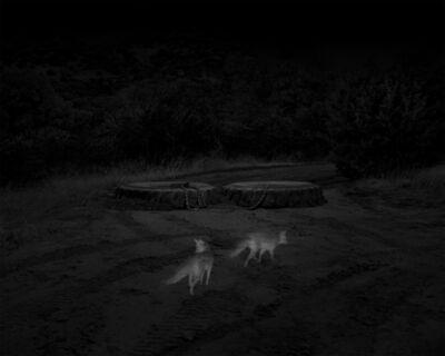 Alex Turner, '2 Gray Foxes, Border Patrol Access Road, San Rafael Valley, AZ', 2019