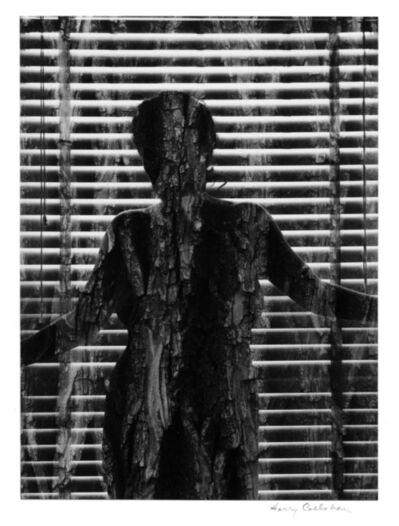 Harry Callahan, 'Chicago (Eleanor and trees)', 1954