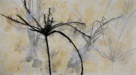 Suzi Davidoff, 'Grass, Creek, Reflection, Madera Canyon, 2/2009 ', 2009
