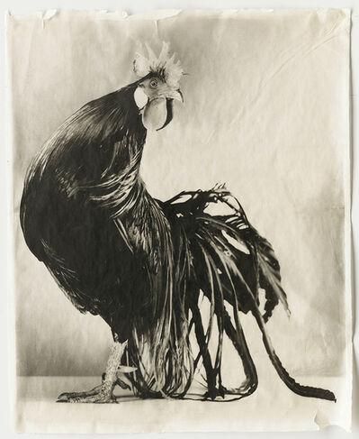 Jean Pagliuso, 'Black #5', 2005