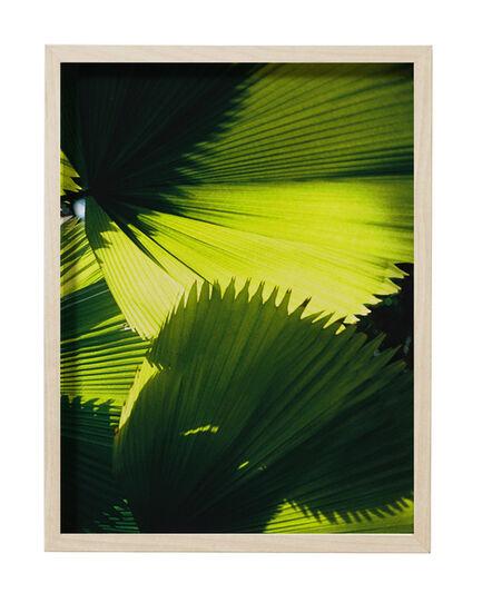 Anne Barlinckhoff, 'Paradise', 2016
