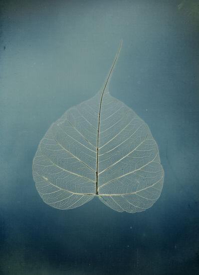"Binh Danh, 'Untitled #5, Bodhi leaf, from the series, ""Aura of Botanical Specimen""', 2017"