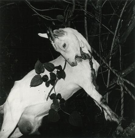 Issei Suda, 'Ginzan Onsen, Yamagata, 1976', 1976-1979