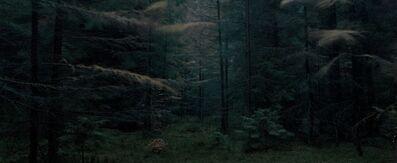 Michael Lange, 'WALD | Landscapes of Memory#0576', 2009