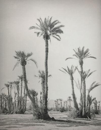Silke Lauffs, 'Palm trees at the Palmeraie, Marrakech, Morocco', 2018