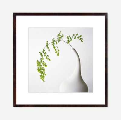 Vivienne Foley, 'Maidenhair Fern in White Funnel Necked Vase', 1996